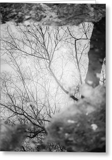 Frozen Tree Reflection Greeting Card