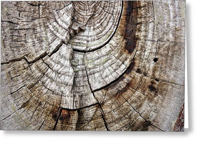 Tree Rings - Photography Greeting Card by Ann Powell