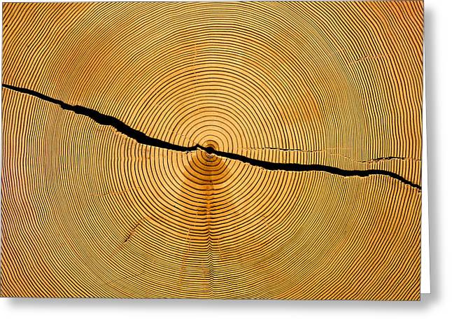 Tree Rings Greeting Card by Steven Ralser
