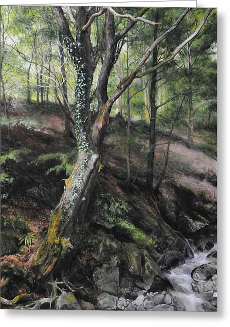 Tree River Wood Greeting Card