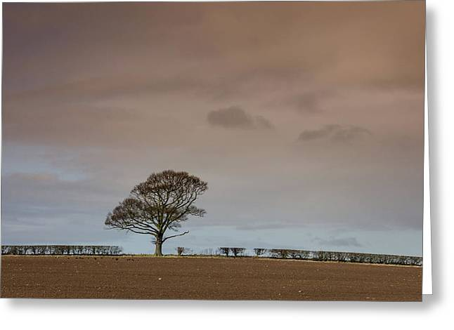 Greeting Card featuring the photograph Tree by RKAB Works