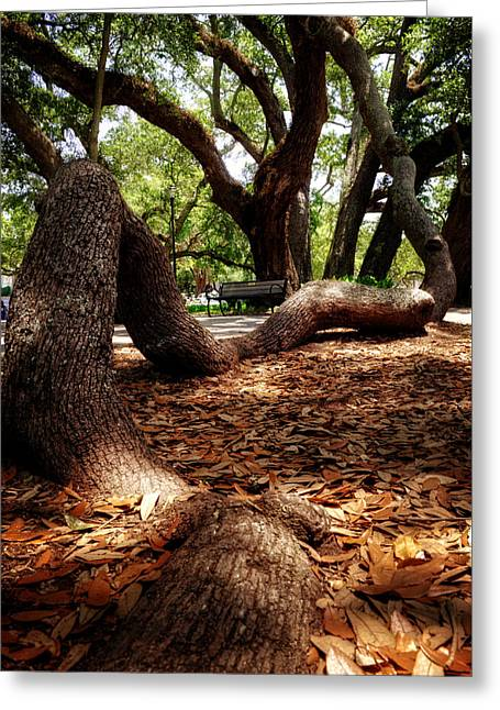 Tree Root Greeting Card by Greg Mimbs