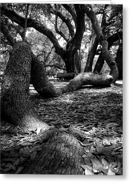Tree Root In Black And White Greeting Card by Greg Mimbs