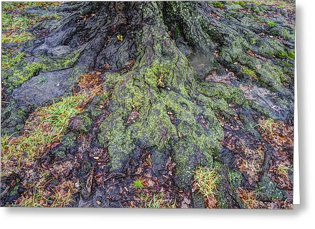 Tree Roots Greeting Card by Dennis Clark