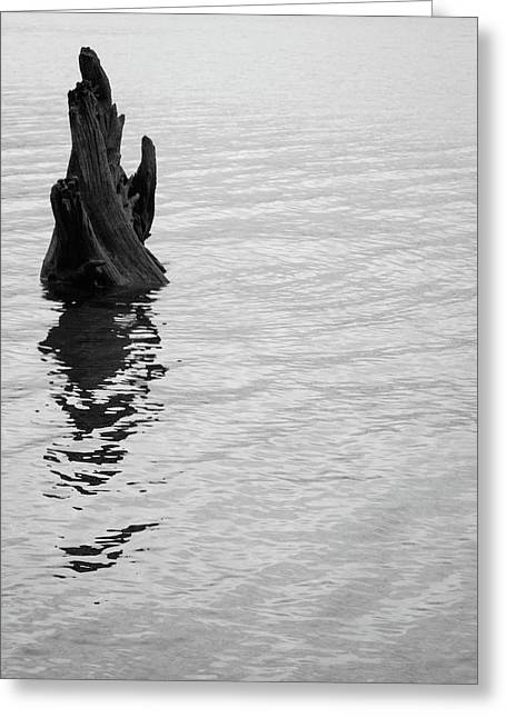 Tree Reflections, Rest In The Water Greeting Card