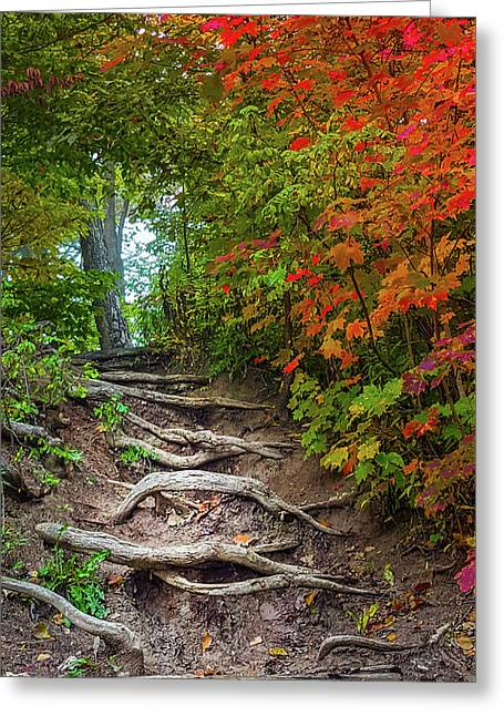 Tree Roots On A Trail Greeting Card