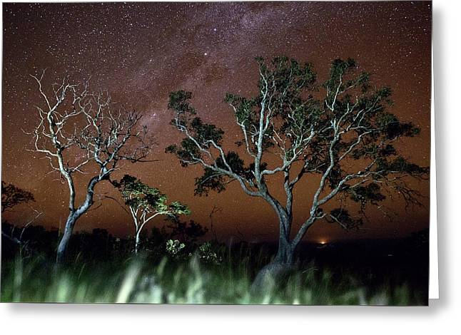 Tree Savanna Stars Sky Serrania De Chiquitos Bolivia Greeting Card