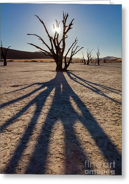 Tree Shadow Greeting Card by Inge Johnsson