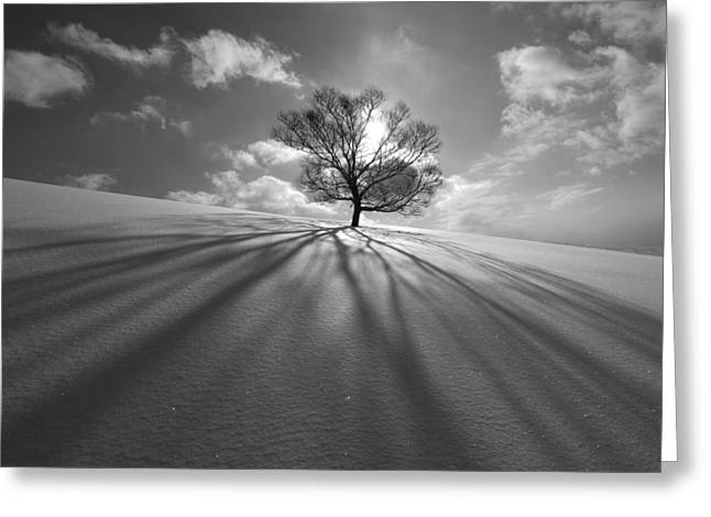 Tree Shadow Greeting Card by Kengo Shibutani
