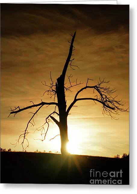 Tree Silhouette At Sundown Greeting Card