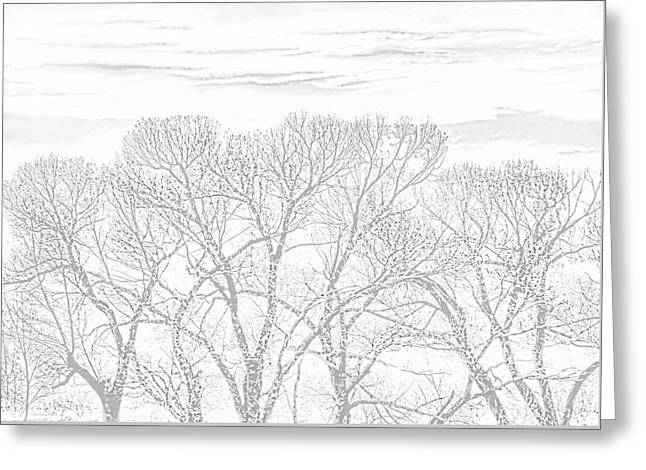Greeting Card featuring the photograph Tree Silhouette Gray by Jennie Marie Schell