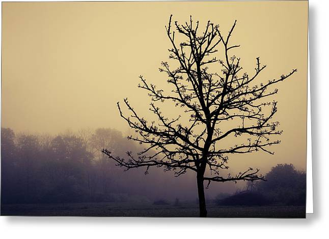 Tree Silhouette On A Foggy Morn Greeting Card