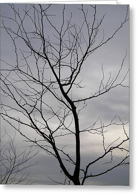 Tree Silhouette  Greeting Card by Richard Mitchell