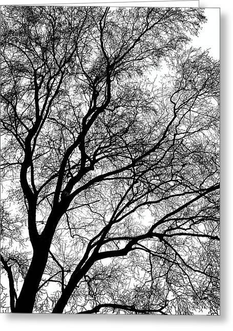 Tree Silhouette Series 1 Greeting Card