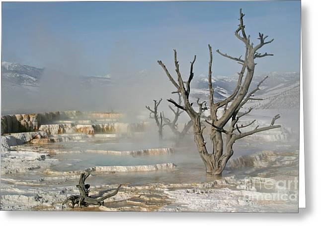 Tree Skeletons In The Mist Greeting Card