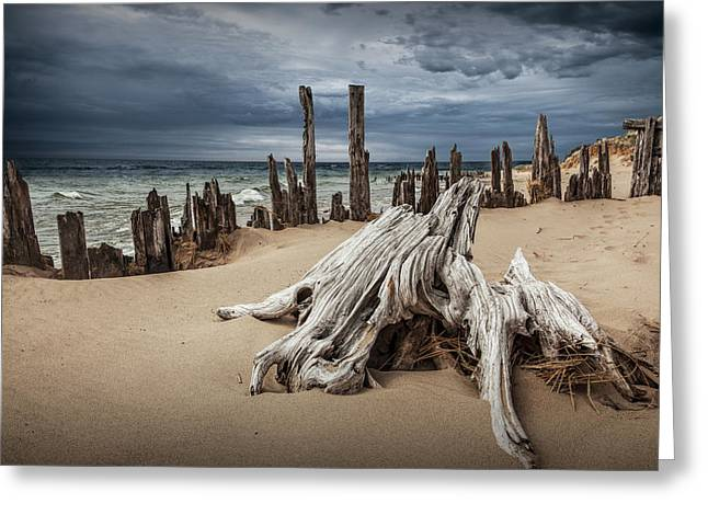 Tree Stump And Pilings On The Beach Greeting Card by Randall Nyhof