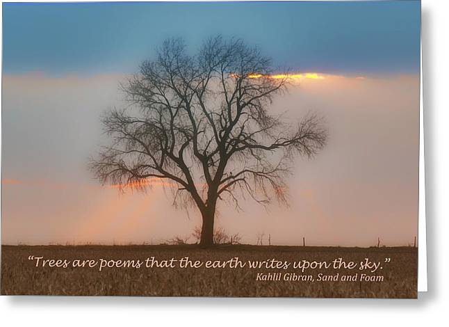 Tree - Sunset - Quotation Greeting Card by Nikolyn McDonald