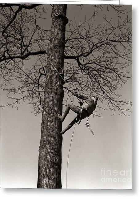 Tree Surgeon Climbing Elm Tree, C.1940s Greeting Card by H. Armstrong Roberts/ClassicStock