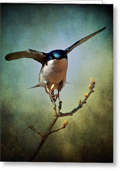 Tree Swallow 2 Greeting Card