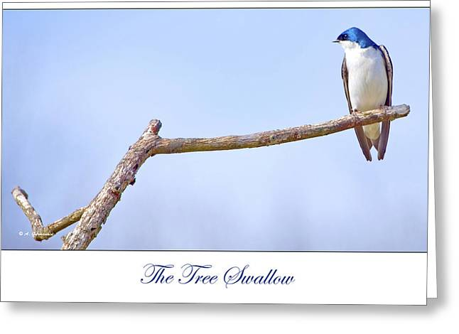 Tree Swallow On Branch Greeting Card