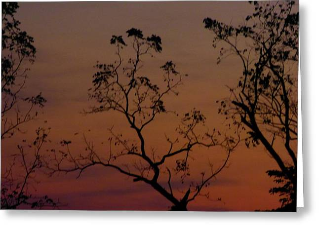 Tree Top After Sunset Greeting Card by Donald C Morgan