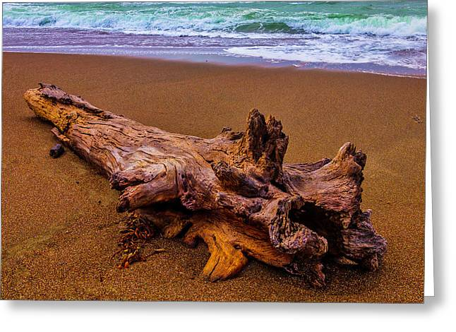 Tree Trunk Driftwood Greeting Card by Garry Gay