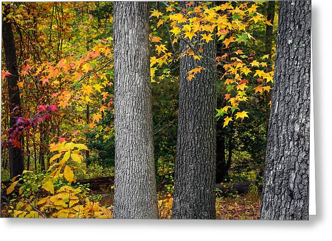 Tree Trunks In Autumn Greeting Card