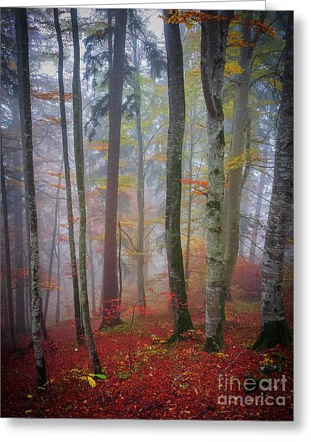 Greeting Card featuring the photograph Tree Trunks In Fog by Elena Elisseeva