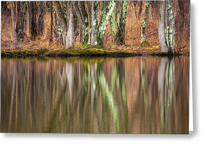 Tree Trunks Reflecting Greeting Card by Karol Livote
