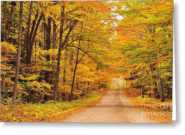 Tree Tunnel On A Country Road Greeting Card