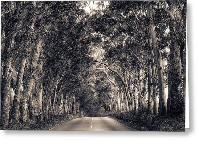 Tree Tunnel Greeting Card by Robert  FERD Frank