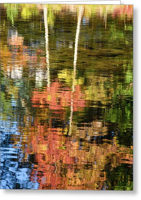 Tree Upside Down Greeting Card by Michael Blanchette