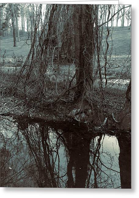 Greeting Card featuring the photograph Tree Vines Water by Robert G Kernodle