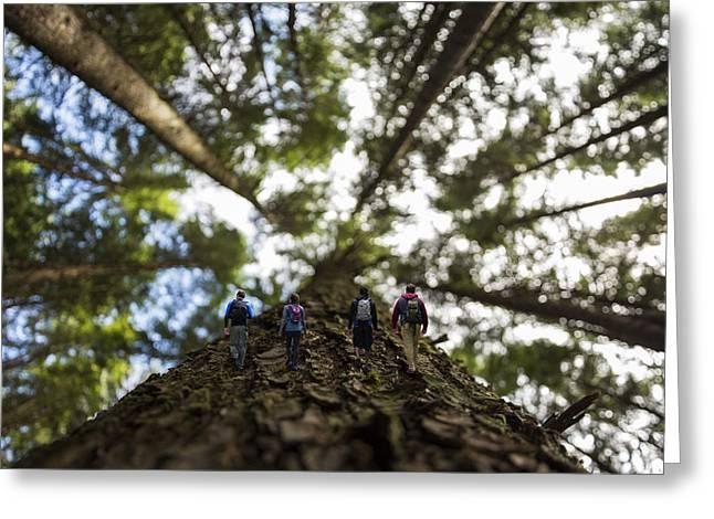 Tree Walkers Greeting Card by Pelo Blanco Photo