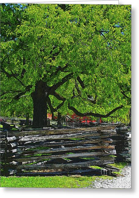 Tree With Colonial Fence Greeting Card