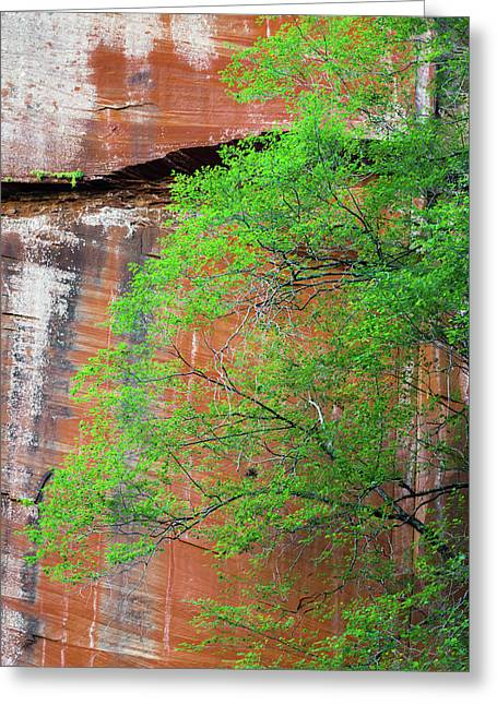 Tree With Red Canyon Wall Greeting Card