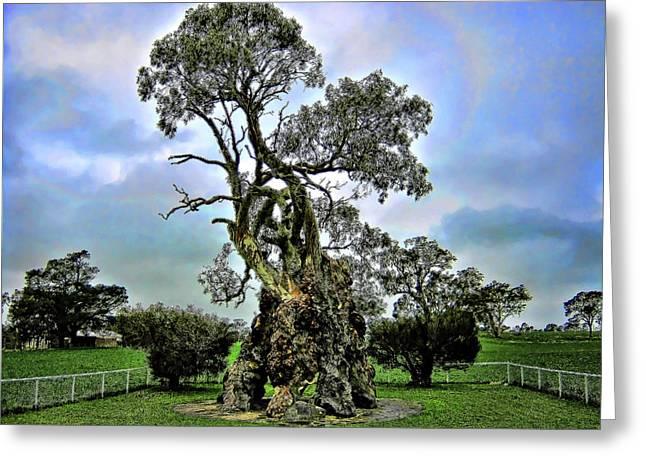 Treehouse Greeting Card by Douglas Barnard