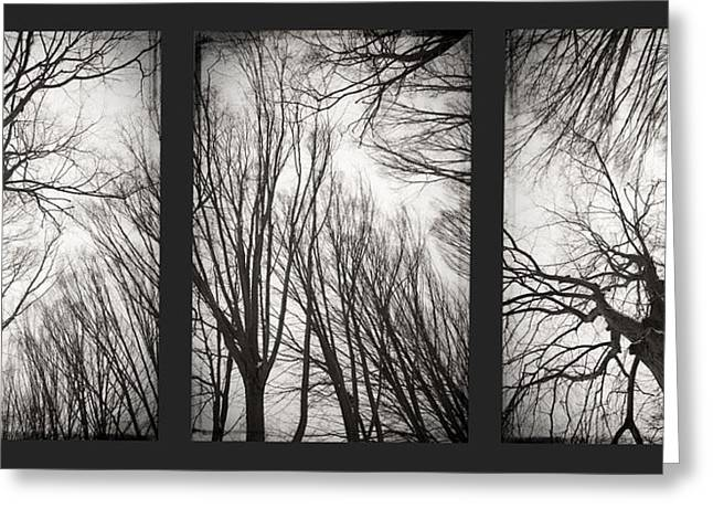 Treeology Greeting Card by Dorit Fuhg