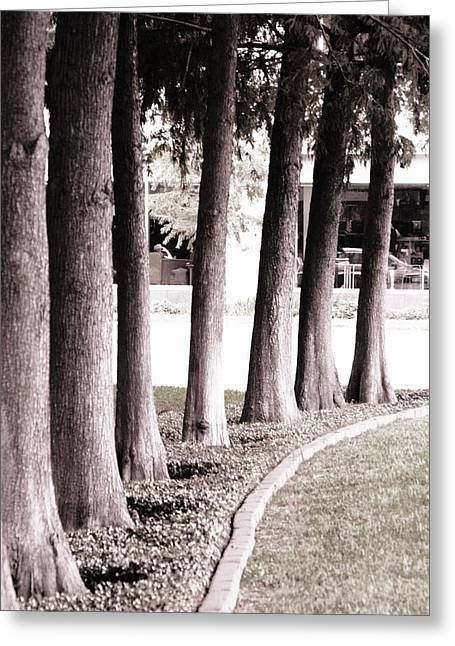 Trees 2 Greeting Card by Gracey Tran