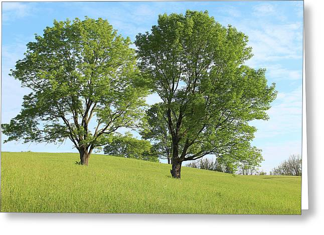 Summer Trees 4 Greeting Card