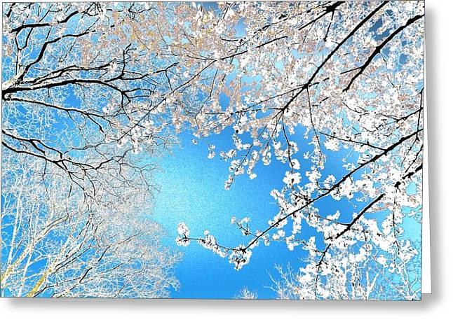 Blossoms #01 Greeting Card by Ninie AG