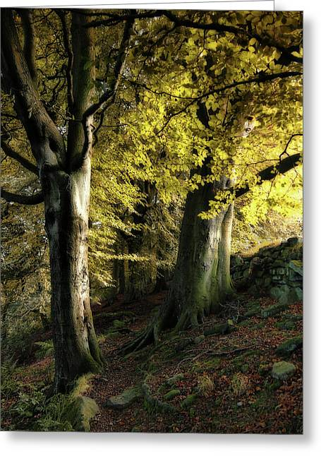 Autumn Trees Against The Wall In Crow Nest  Woods Greeting Card
