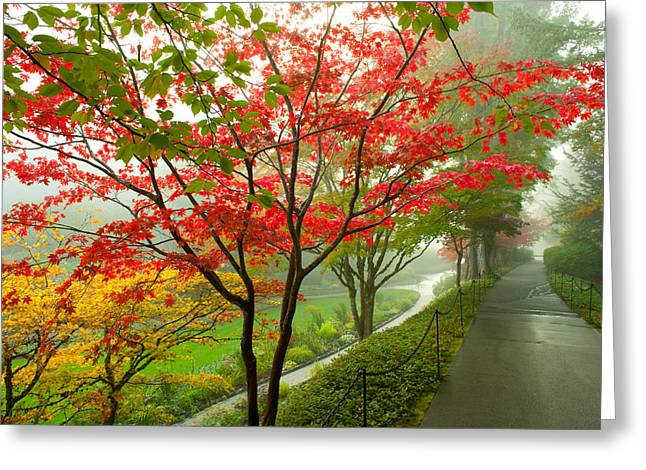 Trees Along A Garden Path, Victoria Greeting Card by Panoramic Images