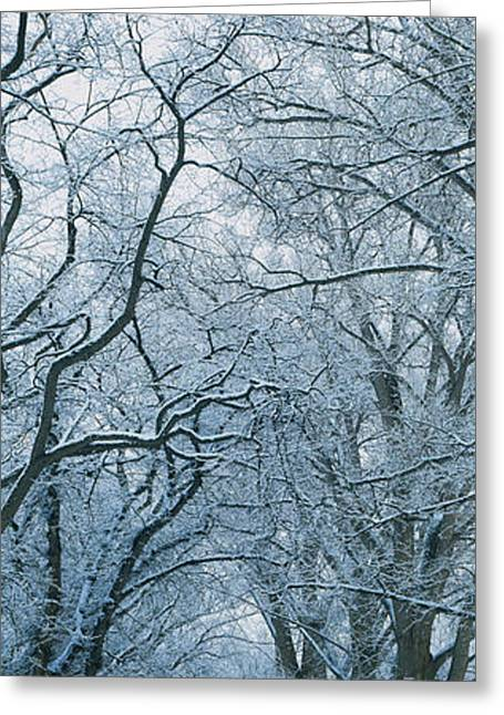 Trees Along A Road, Taos, New Mexico Greeting Card by Panoramic Images