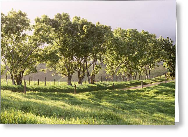 Trees Along Country Road Greeting Card