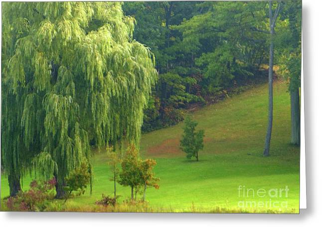 Trees Along Hill Greeting Card