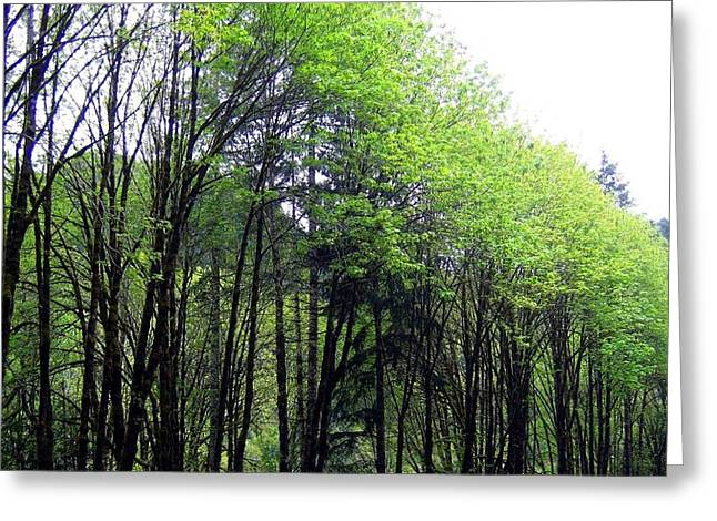 Trees Along The Umpqua River 2 Greeting Card by Will Borden