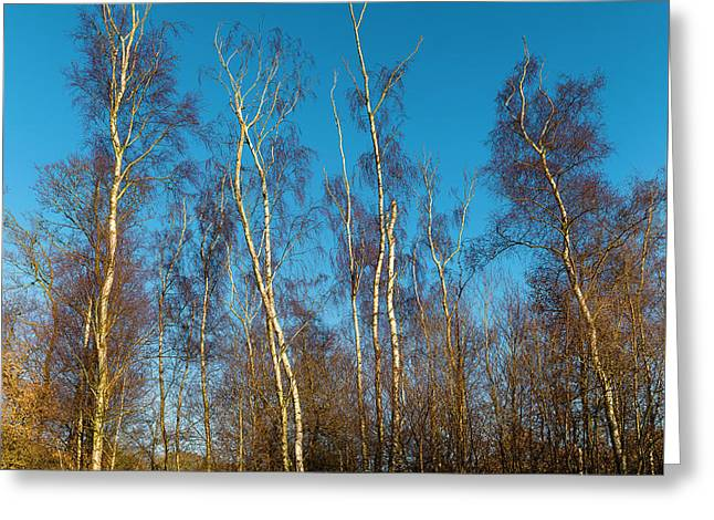 Trees And Blue Sky Greeting Card