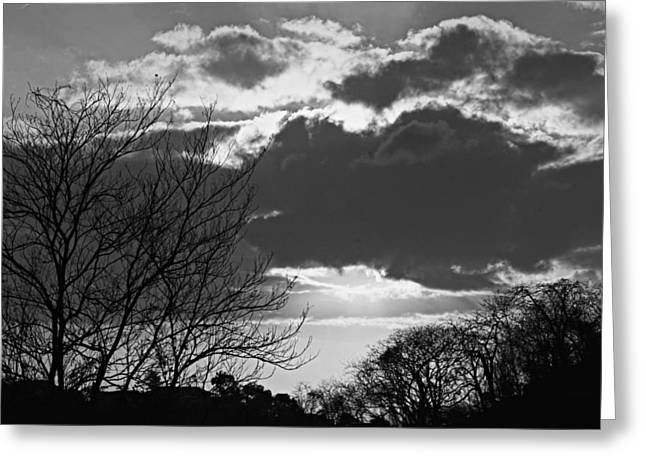 Trees And Clouds-st Lucia Greeting Card by Chester Williams