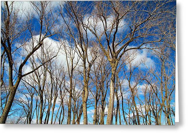 Greeting Card featuring the photograph Trees And Clouds by Valentino Visentini